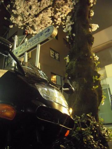 富岡八幡宮の前の桜とZZR