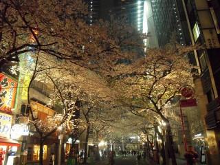 東京駅八重洲口の桜通りの夜桜です